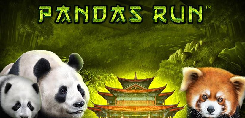 Panda's Run Slot Review